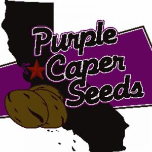 Purple Caper Seeds