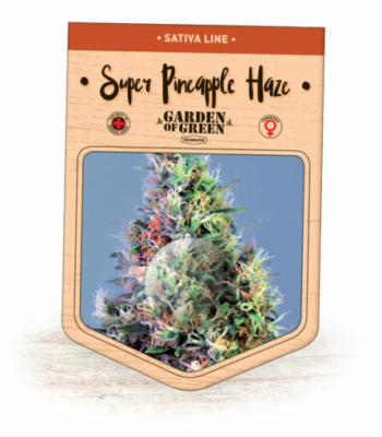 Super Pineapple Haze